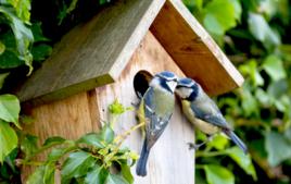 J'observe les oiseaux - Activités Montessori - 10doigts.fr