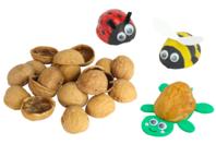Demi coquilles de noix - 50 pièces - Pommes de pin et brindilles - 10doigts.fr