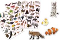 Gommettes animaux réalistes - 96 stickers - Gommettes Animaux - 10doigts.fr