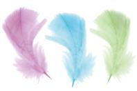 Plumes couleurs pastel - Set d'environ 50 plumes - Plumes - 10doigts.fr