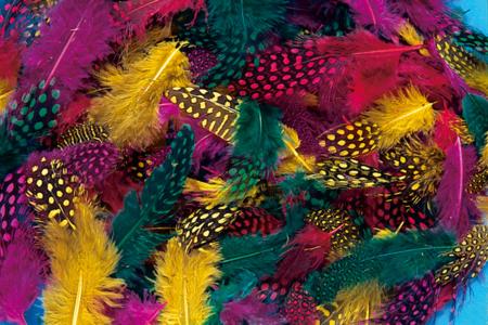 Plumes de faisan colorées - Set d'environ 250 plumes - Plumes – 10doigts.fr