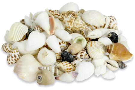 Coquillages - assortiment de 500 gr - Galets et coquillages – 10doigts.fr