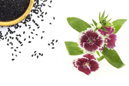 Sachet de graines d'œillets de Chine - Graines à planter – 10doigts.fr