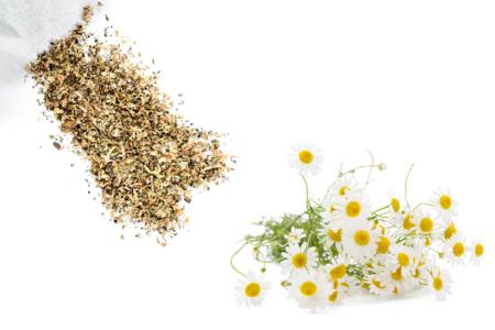 Sachet de graines de camomille - Graines à planter – 10doigts.fr