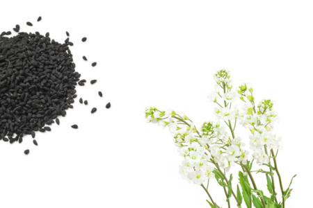 Sachet de graines de corbeille d'argent - Graines à planter – 10doigts.fr