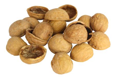 Demi coquilles de noix - 50 pièces - Pommes de pin et brindilles – 10doigts.fr