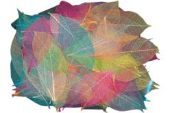 Feuilles en dégradé de couleurs - Set de 120 - Fleurs et feuilles – 10doigts.fr