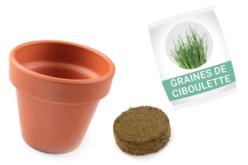 Ciboulette en pot - kit pour 12 réalisations - Graines à planter – 10doigts.fr