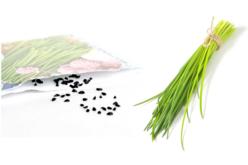 Graines à planter – 10doigts.fr