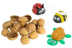 Demi coquilles de noix - 50 pièces - Fleurs séchées, pommes de pin – 10doigts.fr