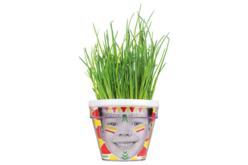 Kit du petit Jardinier : Ciboulette - 4 pots - Graines à planter – 10doigts.fr