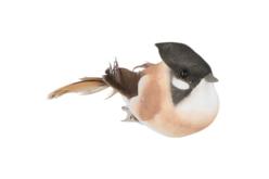 Oiseaux colorés sur pince - Set de 10 - Décorations à coller – 10doigts.fr - 2