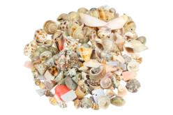 perles coquillages vrac
