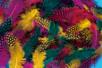 Plumes de faisan colorées - Set d'environ 250 plumes - Plumes - 10doigts.fr