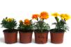 """Kit """"horticulteur"""" - 6 pots - Supports en Céramique et Terre Cuite – 10doigts.fr"""