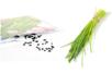 Sachet de graines de ciboulette - Supports en Céramique et Terre Cuite 11969 - 10doigts.fr