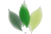 Feuilles en camaïeu vert - Set de 20 - Fleurs et feuilles 13403 - 10doigts.fr