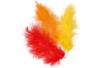 Plumes en camaïeu orangé - Set d'environ 50 plumes - Plumes 10443 - 10doigts.fr