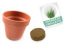 Ciboulette en pot - kit pour 12 réalisations - Graines à planter - 10doigts.fr