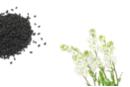 Graines de corbeille d'argent - 1 Sachet - Supports en Céramique et Terre Cuite 11962 - 10doigts.fr